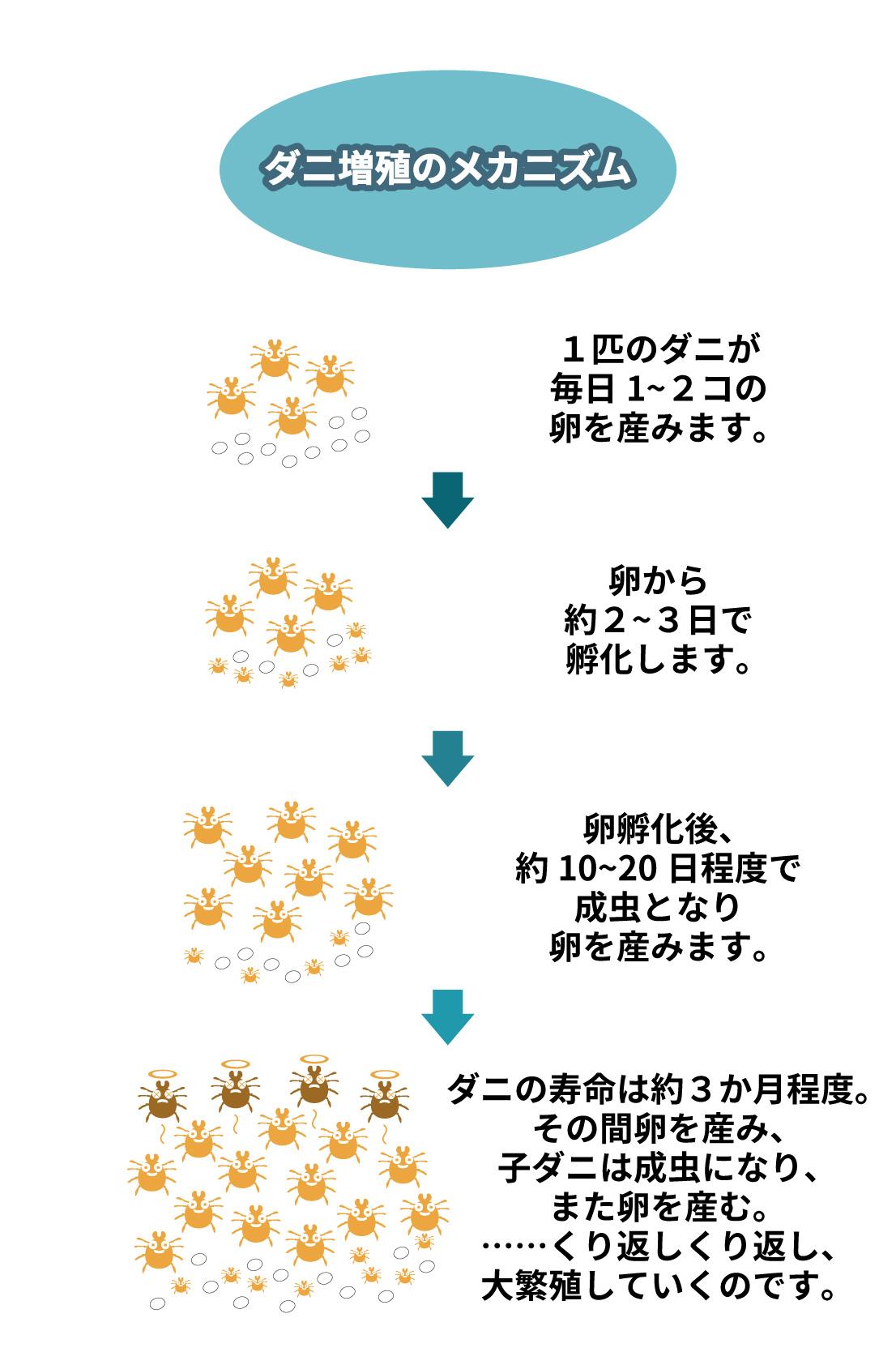 ダニ増殖のメカニズム